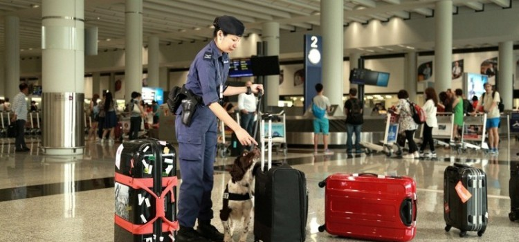 機場保衞犬