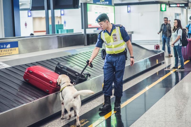 Edwin說毒販常常會將毒品藏於食物內,企圖混淆搜查犬。