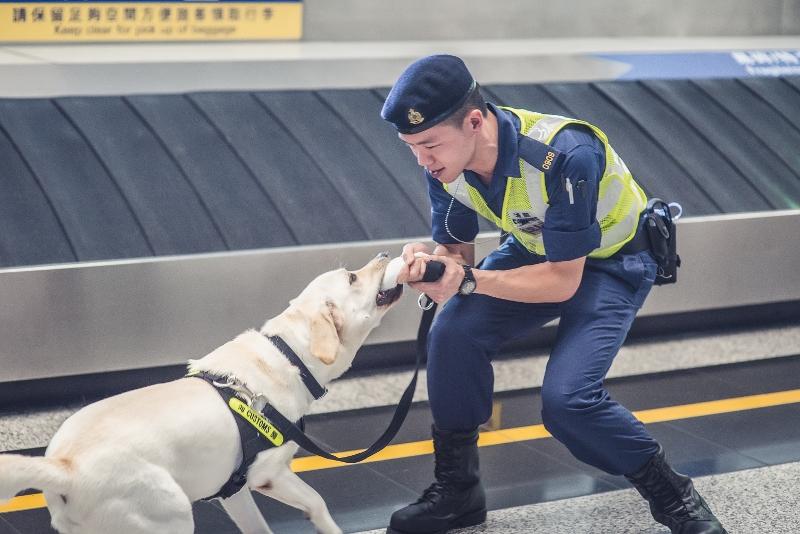 活潑貪玩是當搜查犬的重要條件。Vassos找到毒品或完成工作,Edwin便會與牠玩毛巾拔河遊戲,保持牠對工作的熱情。
