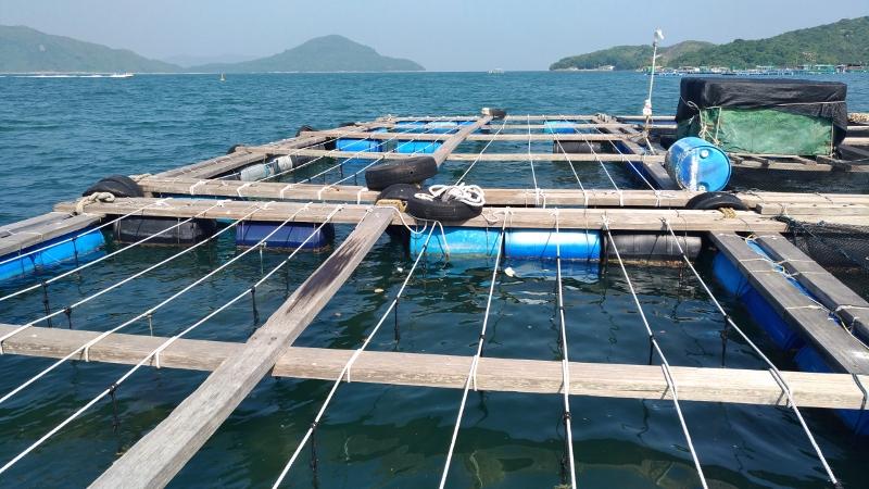 機管局透過漁業提升基金資助珍珠養殖試驗計劃。